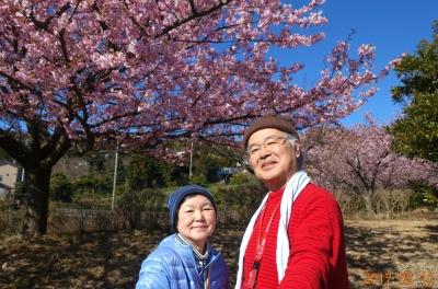 河津桜の下