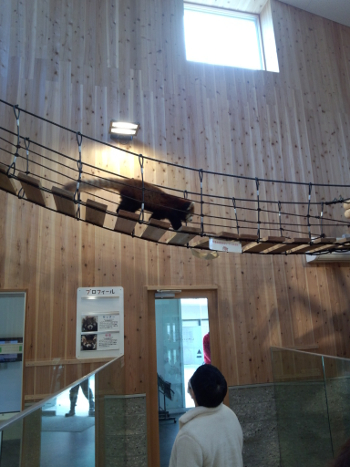 西山公園(鯖江)レッサーパンダ