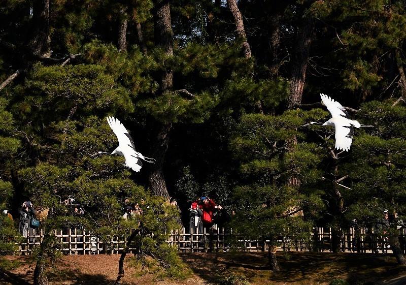 後楽園の丹頂の園内散策10