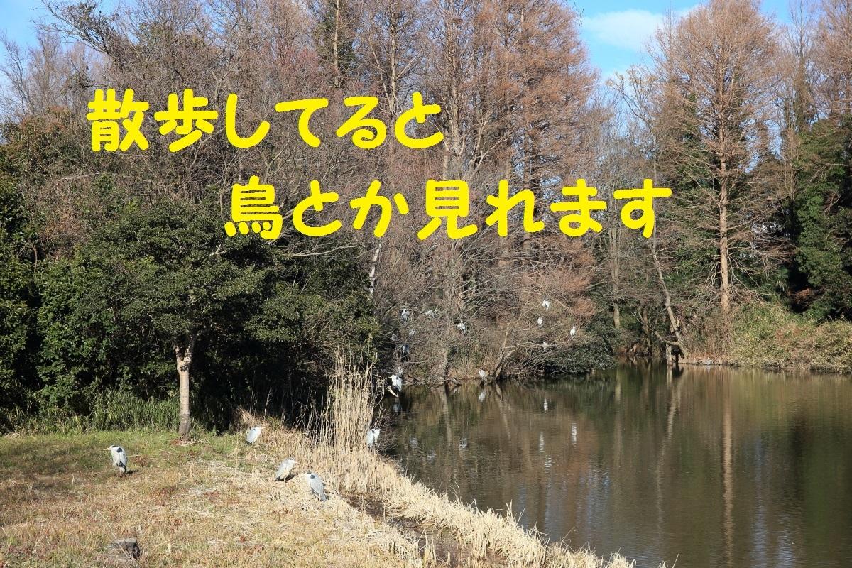 2K5A1181.jpg