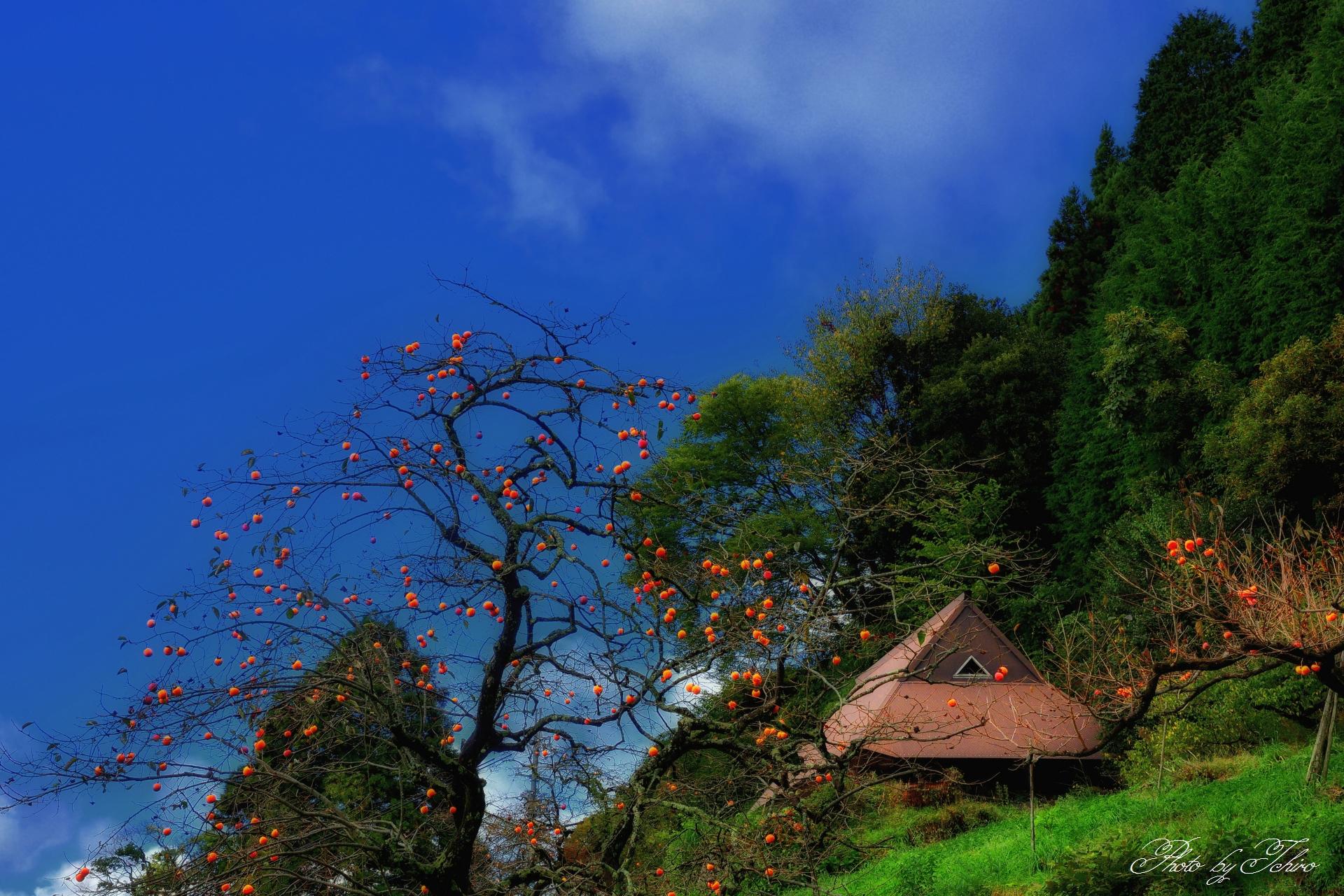 串柿の里山