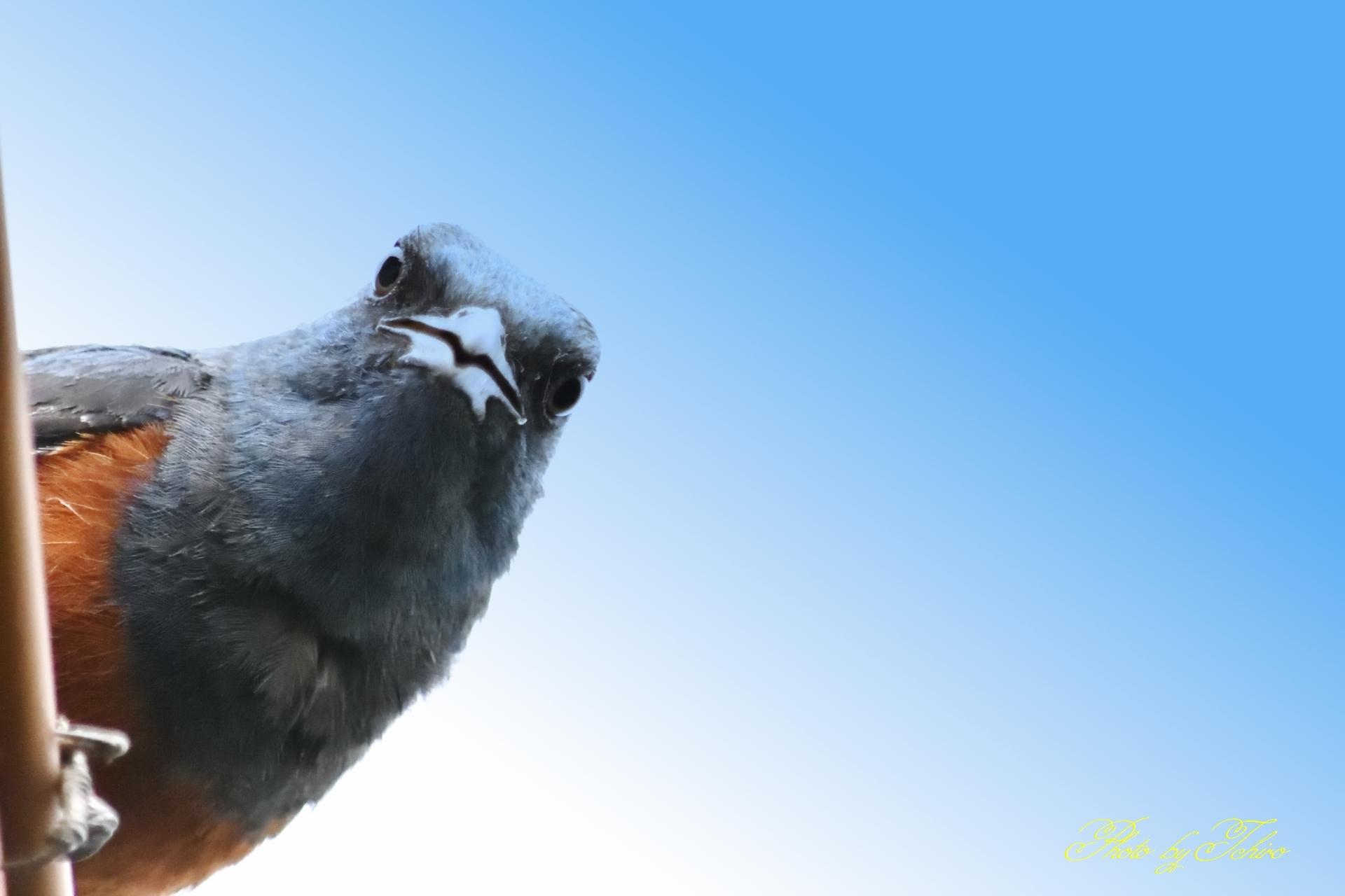 鳥さんもびっくり