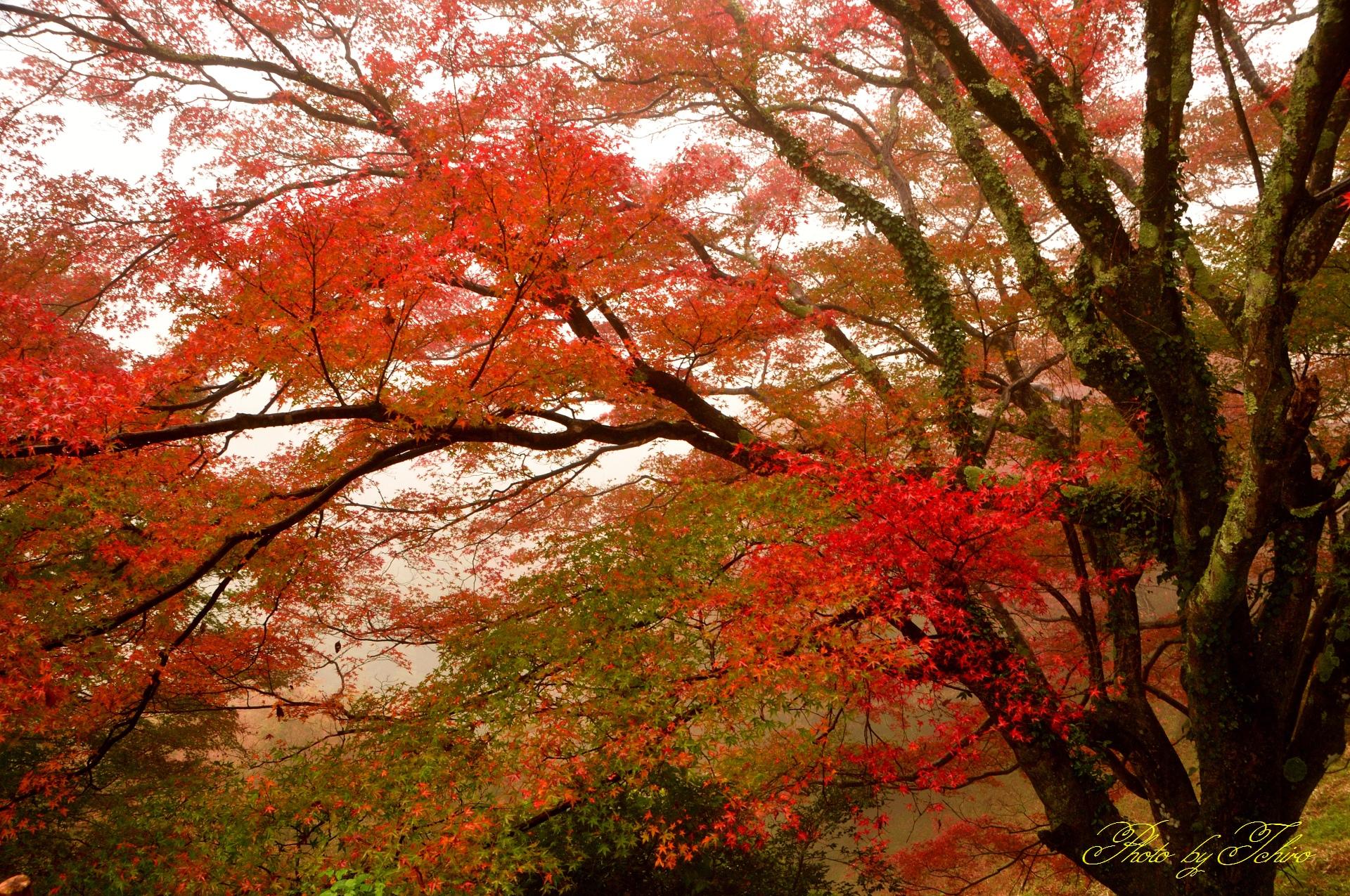吉野山の「紅葉