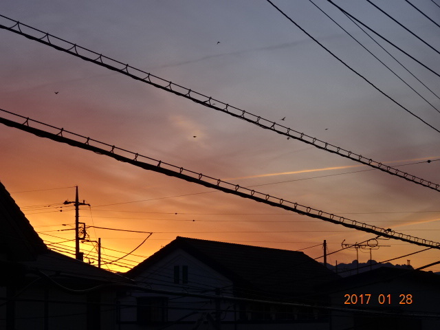 2017_01280131.jpg