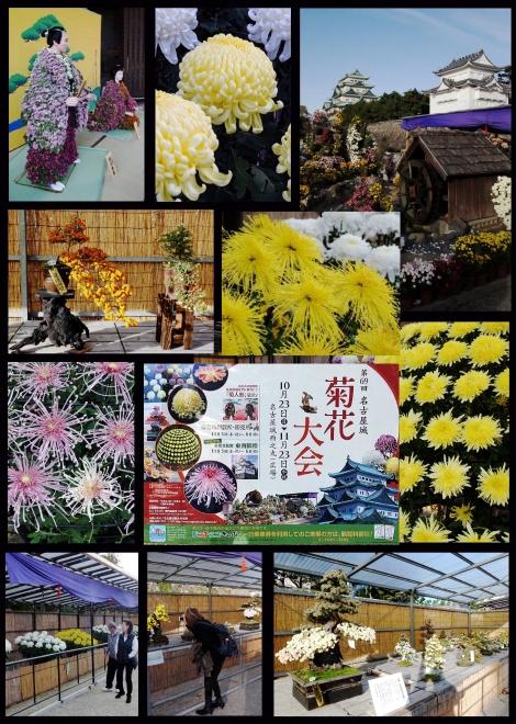 00-組写真 名城菊花展 20161115-00