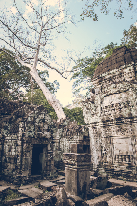 20170125_preah_khan_temple_42.jpg