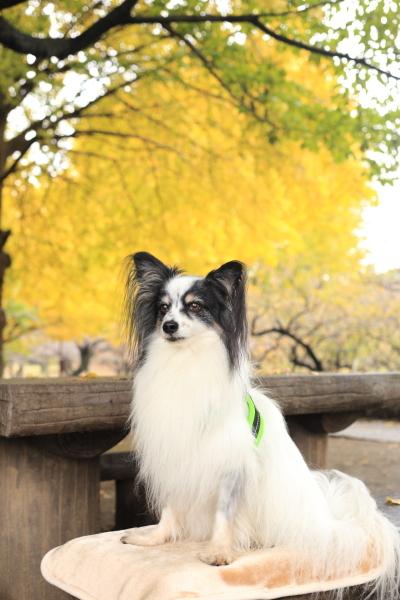 イチロのケアと秋色散歩