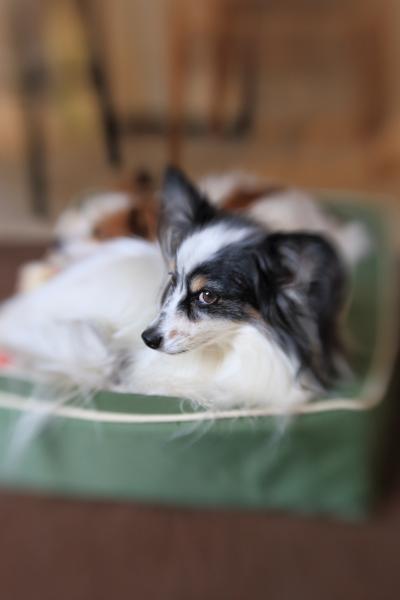 犬鍋 2016