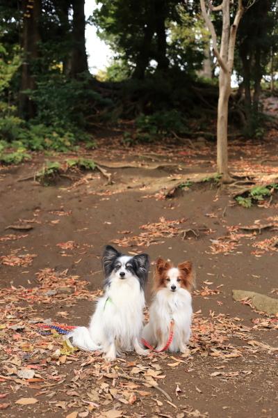 秋色散歩 with イチロー&きなこ 2016