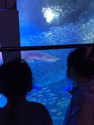 八景島水族館