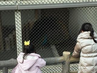 披露山公園クジャク