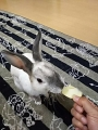 ラパン リンゴ好き