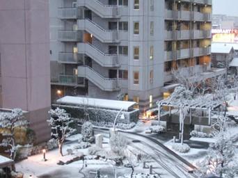 2/10 夕方からの雪