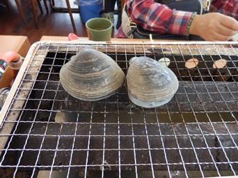 12/30 貝焼き ホンビノス   漁師料理かなや
