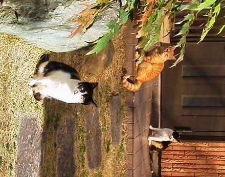 20170101nghbrcats.jpg