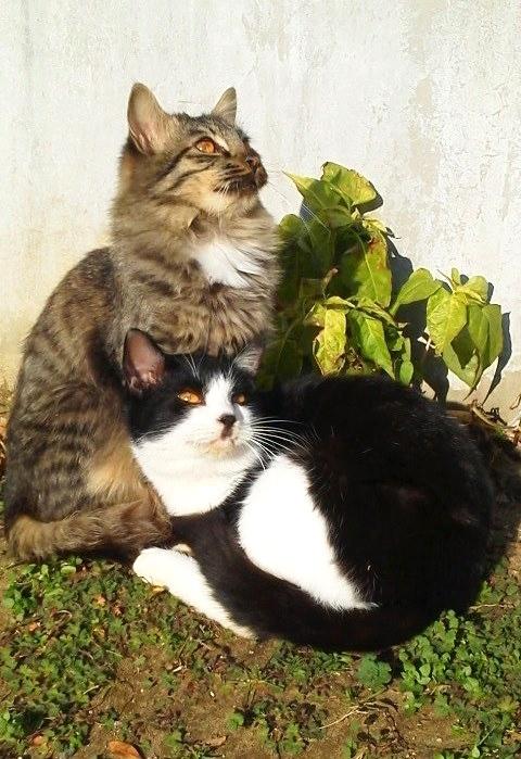 20170104nghbrcatsP100173.jpg