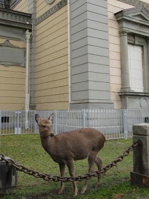 なら仏像館前の鹿