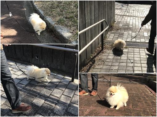 cats1_20170117225853456.jpg