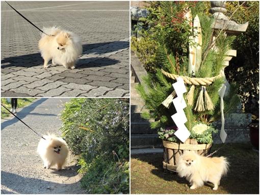 cats2_20170104180248251.jpg