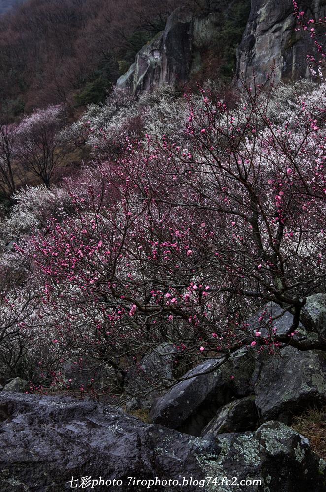 03-06-15_湯河原_0153_edited-1