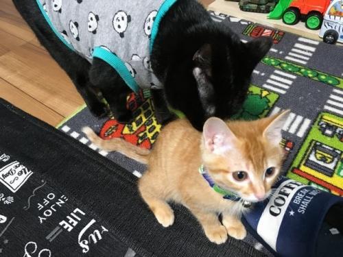 2016-12-23猫