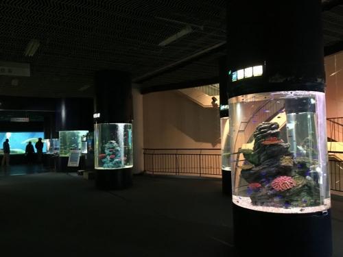 2017-01-29丸水槽