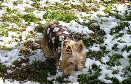 雪降りの翌日