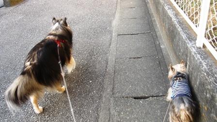 坂道の端っこ歩き2