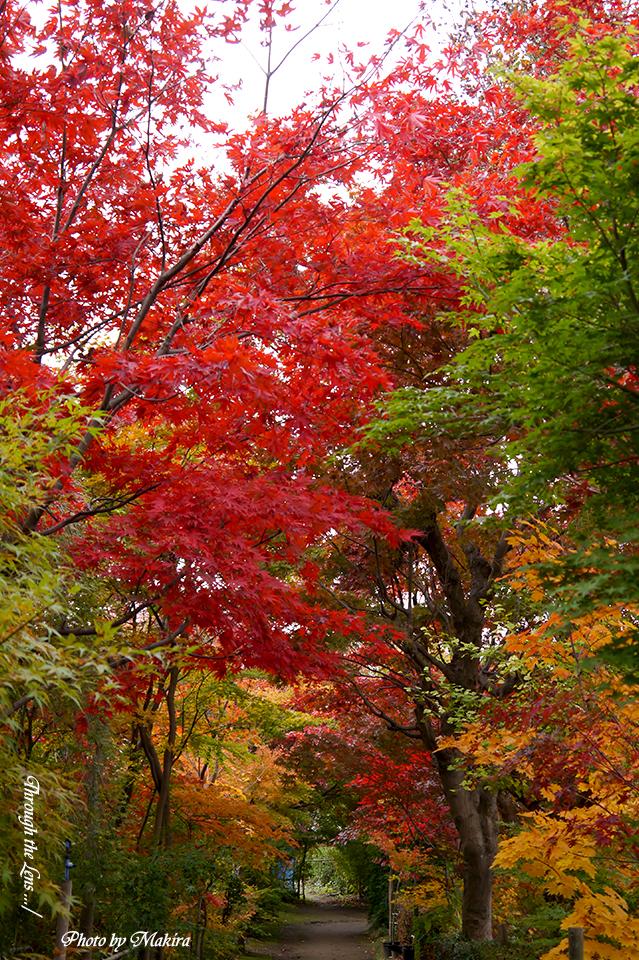 小林槭樹園L3