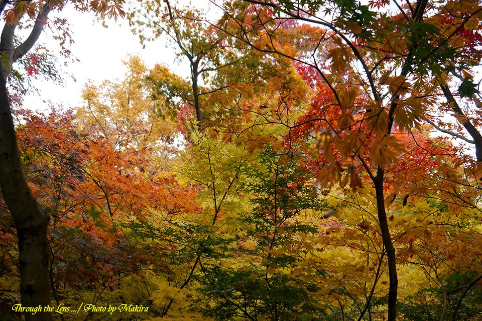 小林槭樹園L8