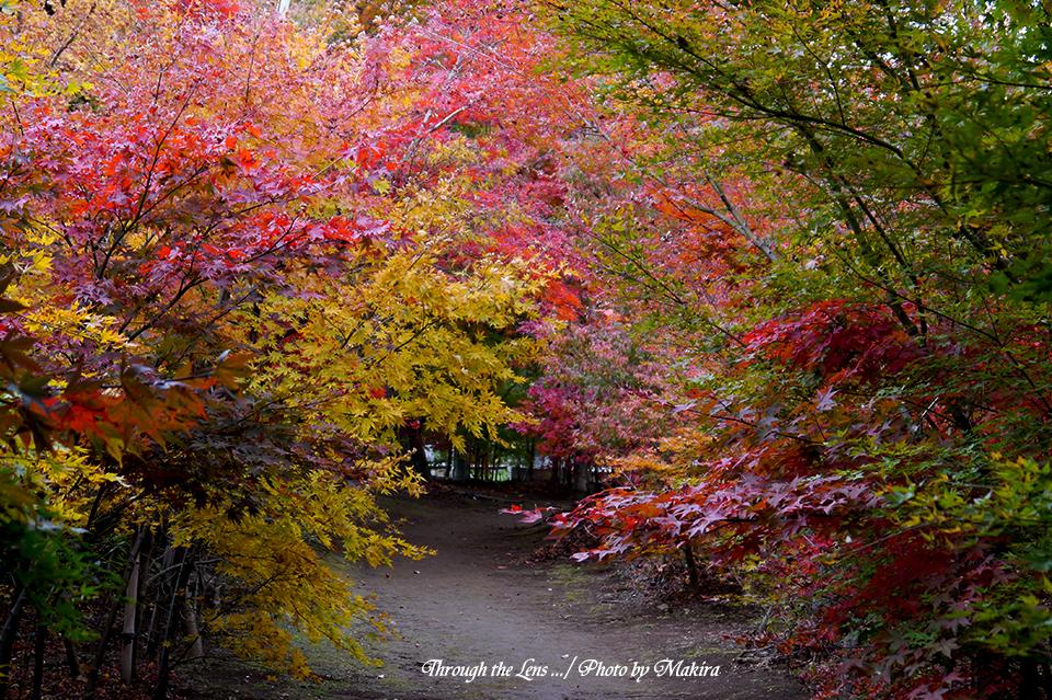 小林槭樹園L11