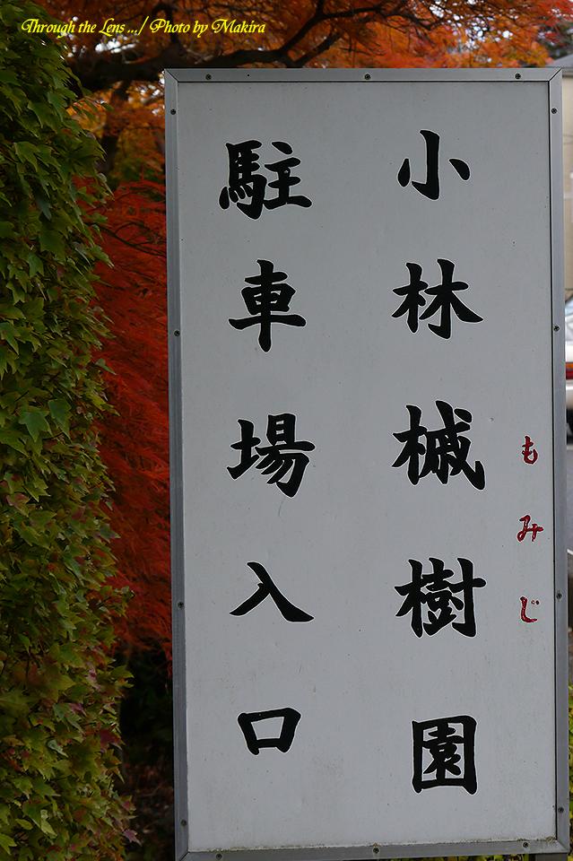 小林槭樹園駐車場入口L1