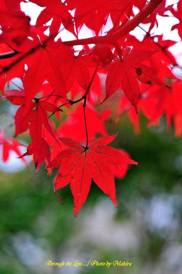 興禅院紅葉8