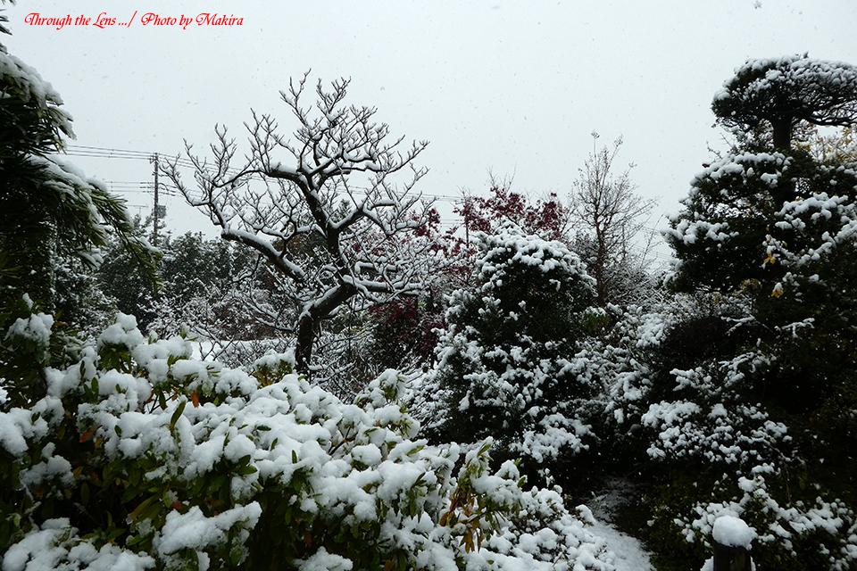 雪景色TZ1