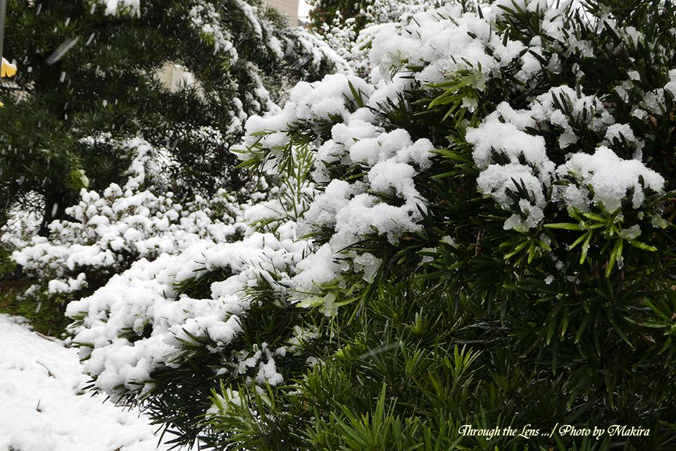 雪景色TZ2