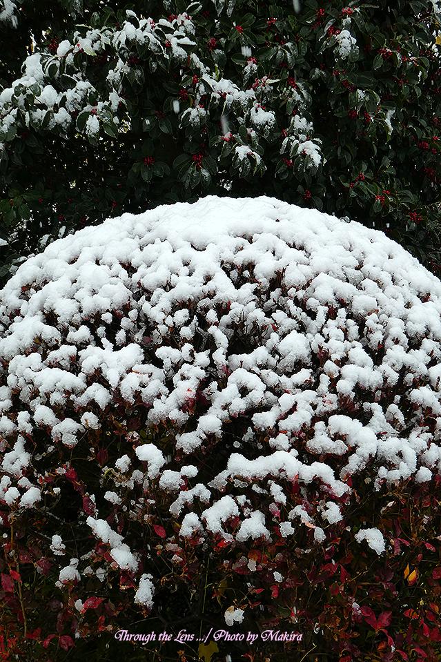 雪景色TZ3