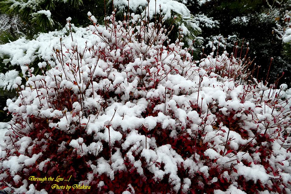 雪景色TZ4