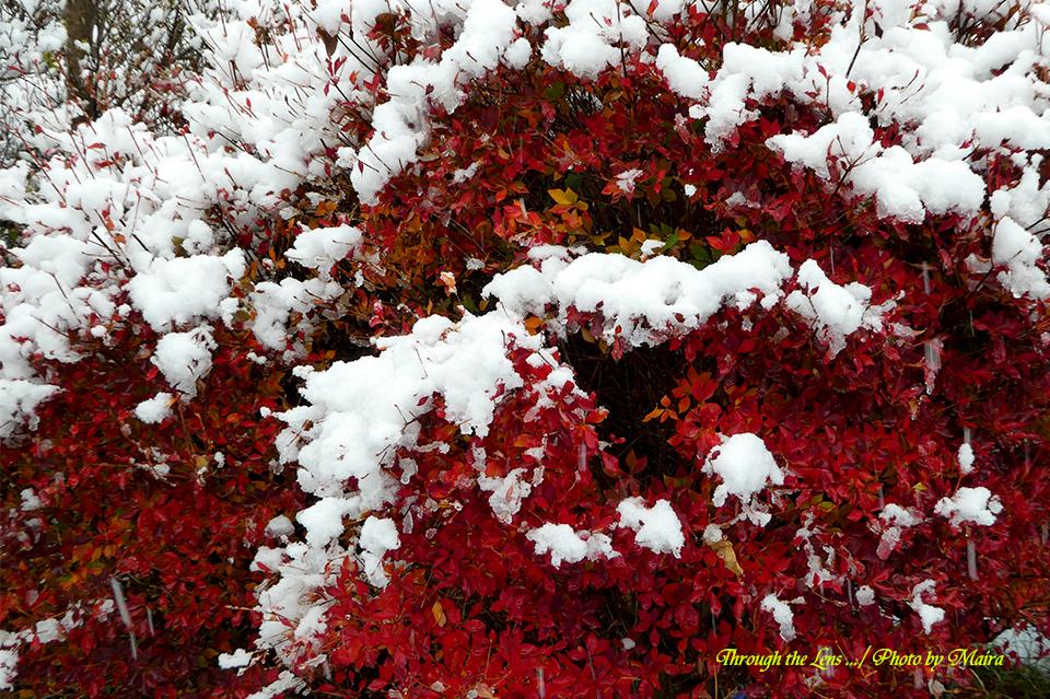 雪景色TZ4-1