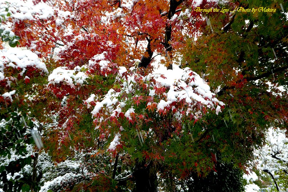 雪景色TZ5