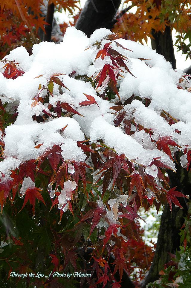 雪景色TZ6