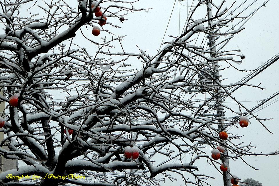 雪景色TZ7