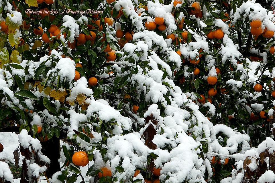 雪景色TZ9