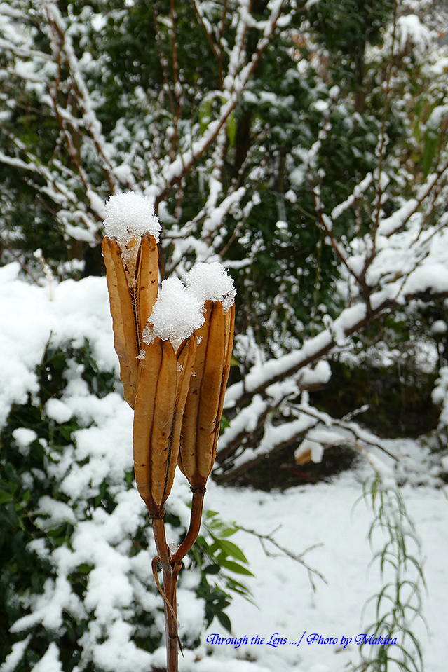 雪景色TZ11
