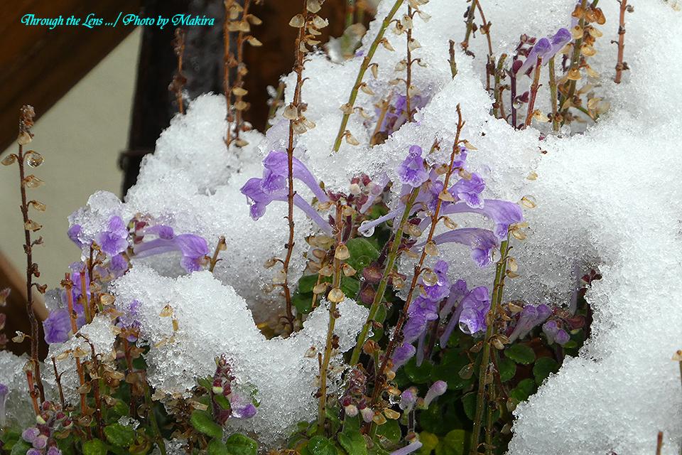 雪景色TZ12