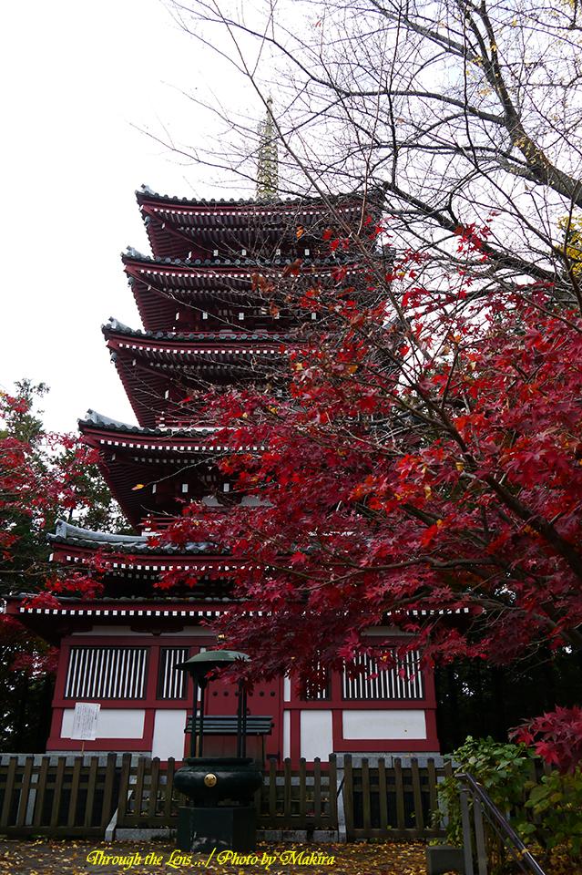 五重塔と紅葉L1