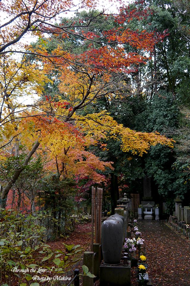 本土寺L2