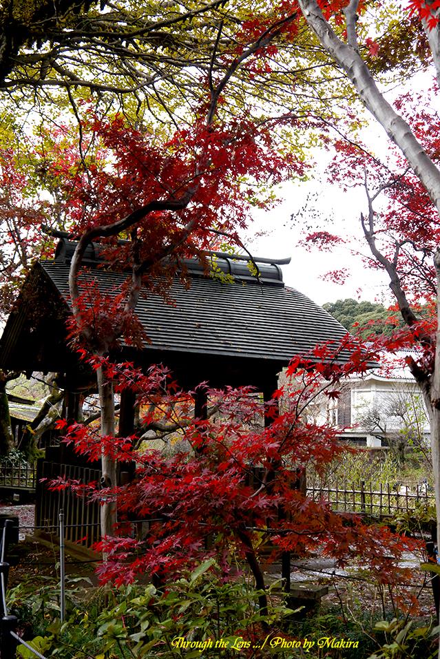 本土寺L6