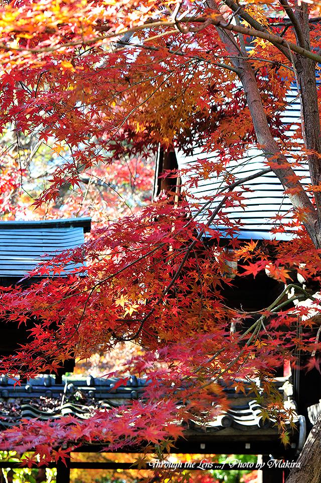 興禅院紅葉1