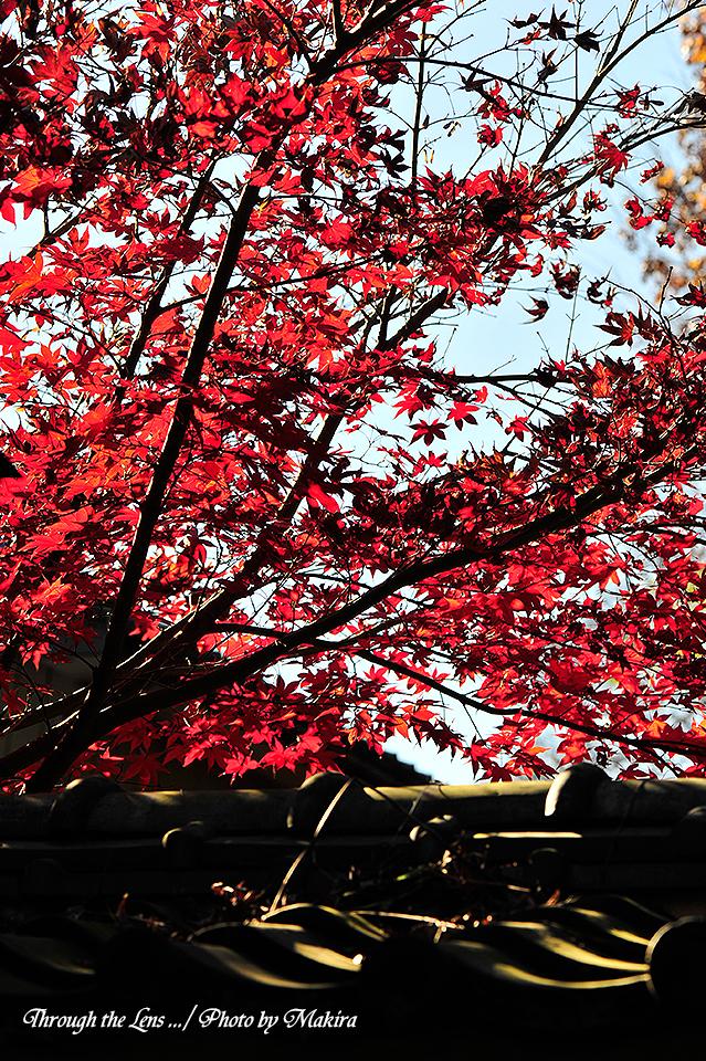 興禅院紅葉2