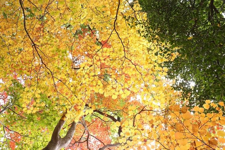 紅葉山公園紅葉1